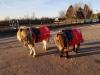 xmas ponies