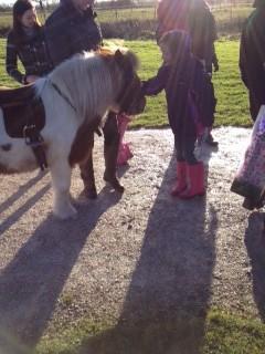 Pony Amp Pets Corner Parties Beaver Hall Equestrian Centre